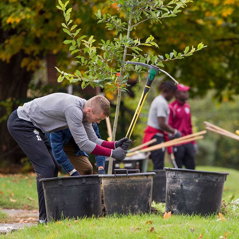 Students plant trees.